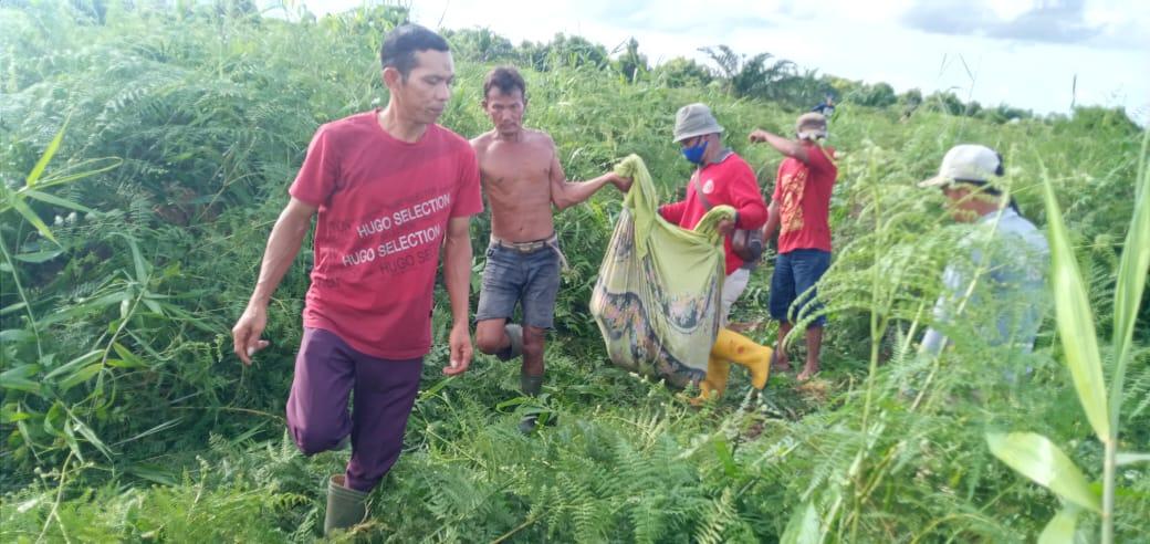 Diduga Diterkam Harimau, Seorang Warga Dumai Ditemukan Tewas Mengenaskan